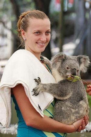 Petra Kvitova Holds a Koala during a visit to the Lone Pine Koala Sanctuary December 28, 2012